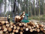Qualitaetswaldpflege_18