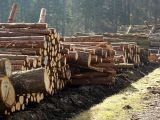 Qualitaetswaldpflege_19
