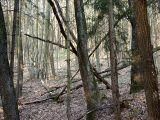 Ungepflegter_Wald_08