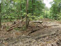 Waldverwuestung_03