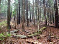 Waldverwuestung_10